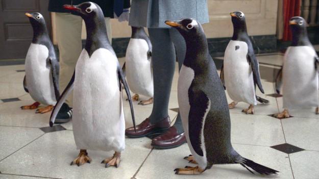 Пингвините на Мистър Попър | Mr. Popper's Penguins (2011)