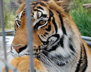 """""""Животни свидетели"""": Вижте как животни разкриват опасни престъпници"""