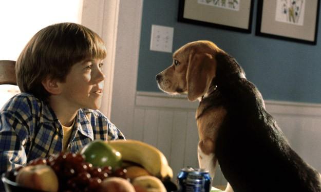 Котки и кучета / Cats and Dogs (2001)
