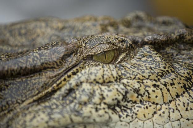 """Discovery Channel разказва """"Легенда за златото на крокодилите"""" от 20 юни"""