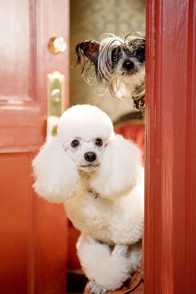 Хотел за кучета | Hotel for Dogs (2009)