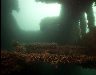 """Колко са потъналите кораби по дъното на Черно море разкрива """"Темата на Nova"""""""