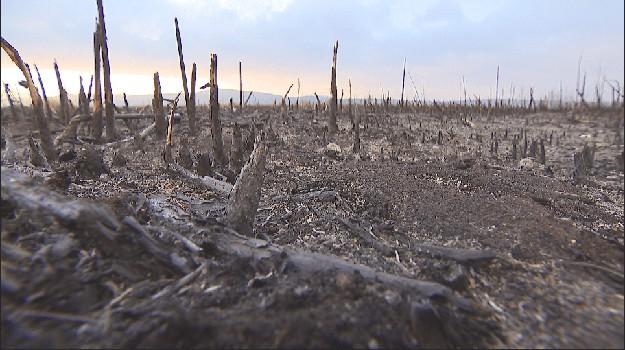 bTV Репортерите по следите на пожарите в защитените български местности