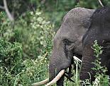 Инстинкт за опасност: Как животните могат да спасят света