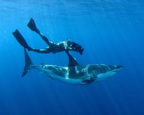 месецът на акулите по Animal Planet