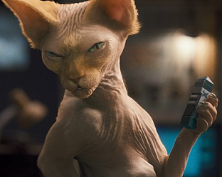"""""""Котки и кучета :Отмъщението на Кити 3 D"""""""